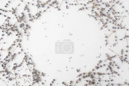 Photo for Top view of round frame of lavender flowers on white tabletop - Royalty Free Image