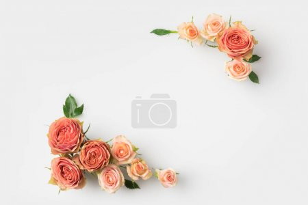 Photo for Pink rose flowers frame isolated on white background with copy space - Royalty Free Image
