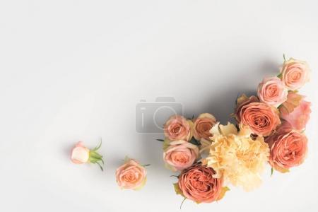 Photo pour Rose rose fleurs isolées sur fond blanc avec espace de copie - image libre de droit
