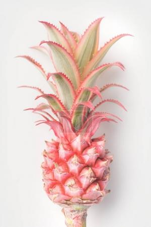 Photo for Pink pineapple on stem closeup isolated on white - Royalty Free Image