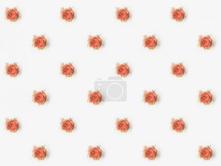 pink flower buds