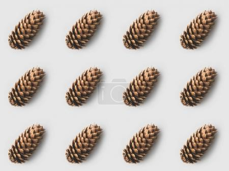 pattern of beautiful pine cones on white surface