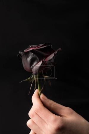 selective focus of woman holding colored in black in hand isolated on black