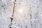 Постер солнце между деревьев покрытые