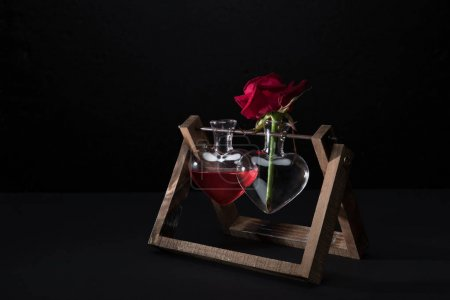 red rose in heart shaped vase and vase with love elixir isolated on black