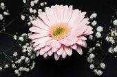 """Постер, картина, фотообои """"Розовые герберы с маленькие белые цветки на ветки сложенные"""""""