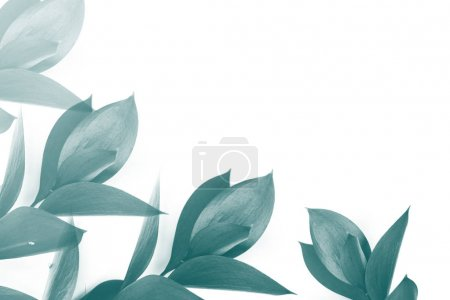 turquoise leaves on twigs isolated on white