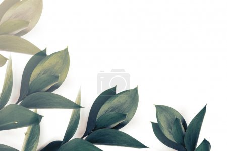 Photo for Green leaves on twigs isolated on white - Royalty Free Image