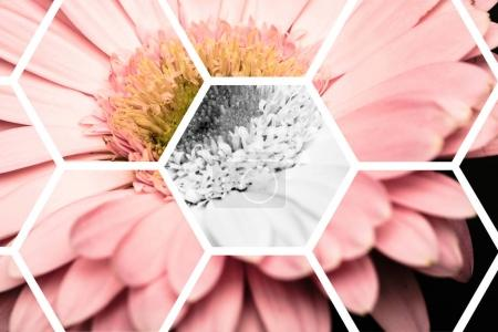 Photo for View through transparent hexagons on pink gerbera - Royalty Free Image