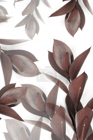 grey and brown leaves on twigs isolated on white