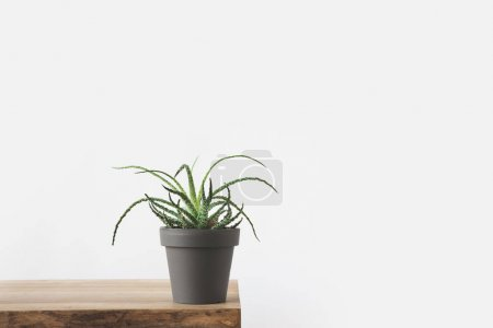 Photo for Green potted plant on wooden table on white - Royalty Free Image