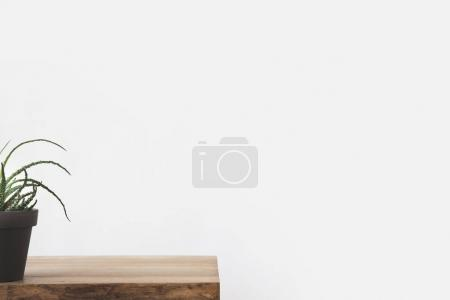 cropped image of green potted plant on table on white