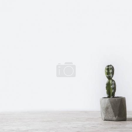 one potted cactus on marble table on white