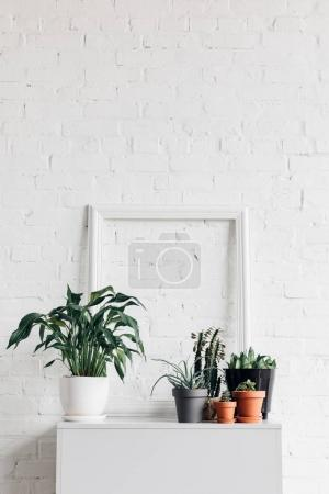 houseplants with empty frame on white table, mockup concept
