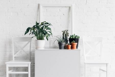 house decor with houseplants in front of white brick wall, mockup concept