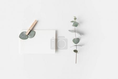 Photo for Flat lay with eucalyptus and blank paper on white surface - Royalty Free Image