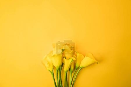 Photo for Close-up view of beautiful yellow calla lily flowers isolated on yellow - Royalty Free Image