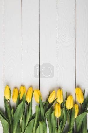 Foto de Tulipanes de la vista superior de hermosa floración amarilla en la superficie de madera blanca - Imagen libre de derechos