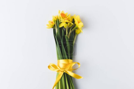 beautiful blooming daffodils flowers with yellow ribbon isolated on grey