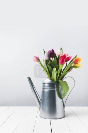 beautiful colorful tulip flowers in watering can on grey