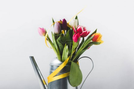beautiful colorful blooming tulips in watering pot with yellow ribbon on grey