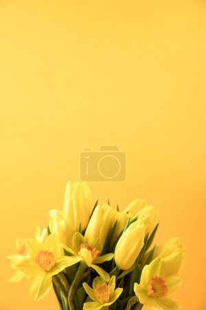 close-up view of beautiful yellow spring flowers isolated on yellow