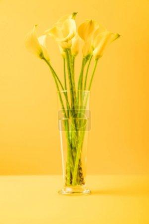 Photo pour Vue rapprochée de belles fleurs jaunes printanières en vase sur jaune - image libre de droit
