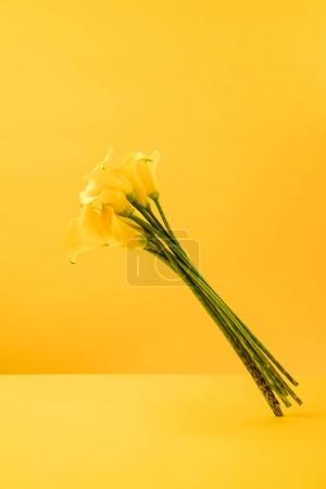 beautiful blooming yellow spring flowers isolated on yellow
