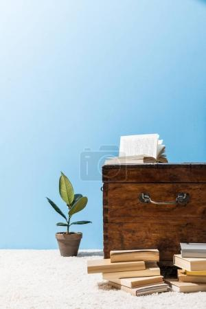 old wooden chest with books and ficus pot in front of blue wall