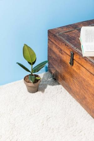 vintage wooden chest with opened book and ficus pot in front of blue wall