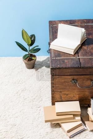 vintage wooden chest with books and ficus pot in front of blue wall