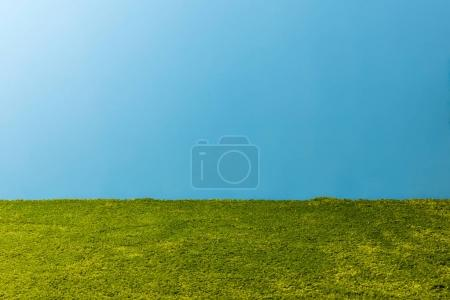 green carpet in front of blue wall