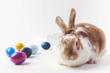 Bunny with painted in different colors eggs, easter concept