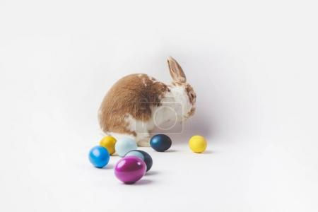 Side view of rabbit with painted easter eggs, easter concept