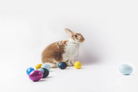 Side view of bunny with painted easter eggs, easter concept