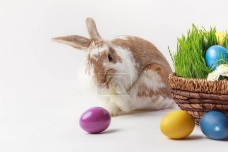 Painted eggs and bunny near basket with grass and flowers, easter concept