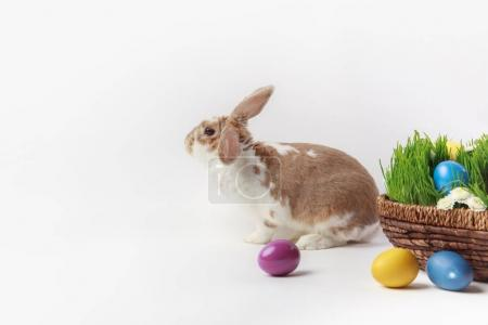 Side view of rabbit near easter basket with grass and eggs, easter concept