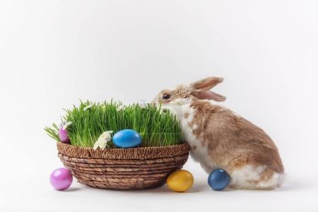 View of rabbit and easter basket with grass and painted eggs, easter concept