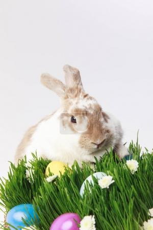 Photo pour Lapin sur herbe avec camomilles et œufs peints, concept de Pâques - image libre de droit