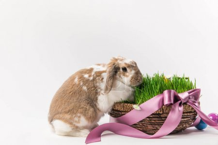 Photo for Rabbit near basket with grass bound by pink ribbon, easter concept - Royalty Free Image