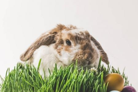 Rabbit sitting in grass with painted in different colors eggs, easter concept