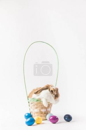 Front view of basket with rabbit and eggs, easter concept