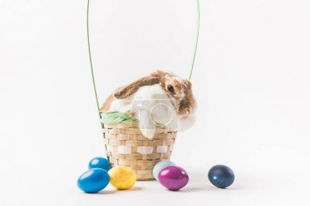 Rabbit sitting in basket surrounding by painted eggs, easter concept