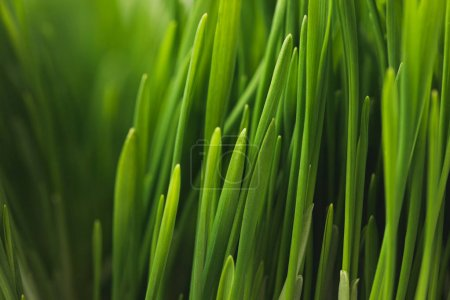 Full frame of green grass stems