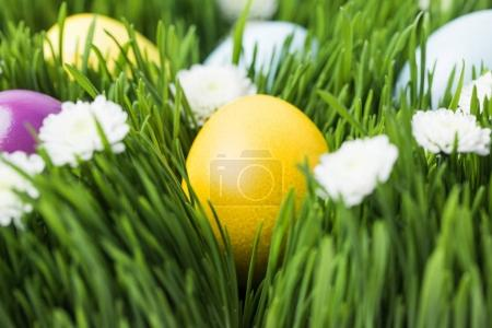 Painted in different colors easter eggs on grass, easter concept