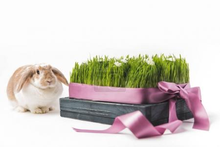 Rabbit sitting near grass with camomiles bound by ribbon, easter concept