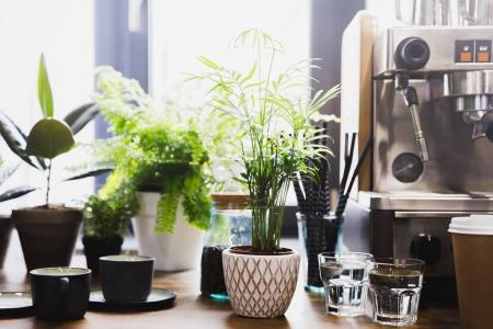 Photo for Espresso machine in coffee shop interior with cups and green plants - Royalty Free Image
