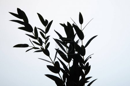 black silhouette of bouquet of branches with leaves on white