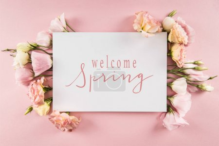 Top view of WELCOME SPRING card and beautiful blooming flowers isolated on pink