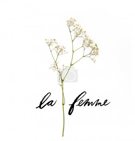 Photo for Small white flowers on twig with LE FEMME lettering isolated on white - Royalty Free Image